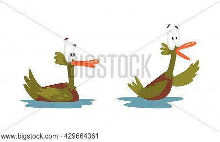 Funny Green Dabbling Duck Character Swimming On The Lake As Feathered Waterfowl Bird Vector Set