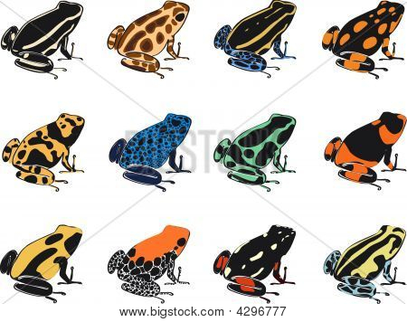 Colors And Patterns Of Poison-dart Frogs