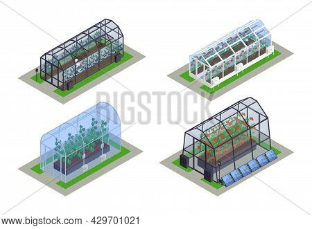 Isometric Greenhouse Modern Smart Icon Set Four Different Sized Greenhouses With Seedlings Inside Ve