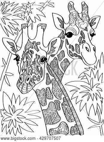 Two Giraffe Head Looking At Both Sides With Tall Trees Colorless Line Drawing. Giraffa Heads Long Ne