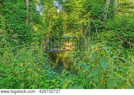 Image Of Stream Flowing Through Green Lush Forest