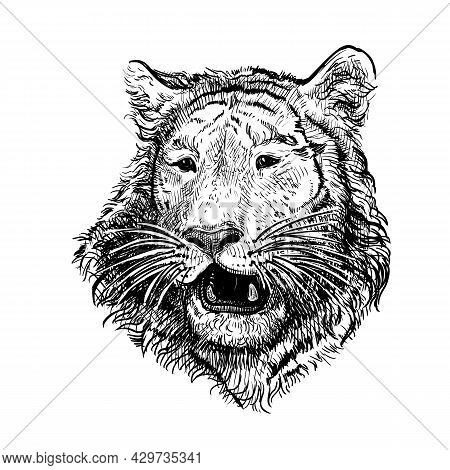 Hand Drawn Black And White Sketch Of Tiger. Wild Animal. Tiger Is A Symbol Of The 2022 Chinese New Y
