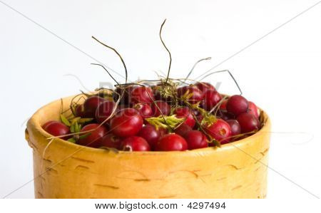 The Cranberry