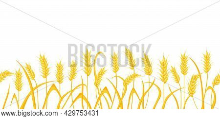 Cartoon Farm Field Background With Golden Wheat Spikes. Agriculture Cereal Crop Ears. Rural Scene Wi