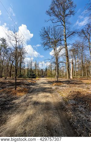 Straight Dirt Country Road Between Bare Trees, Depth Perspective, Sunny Spring Day With A Blue Sky A