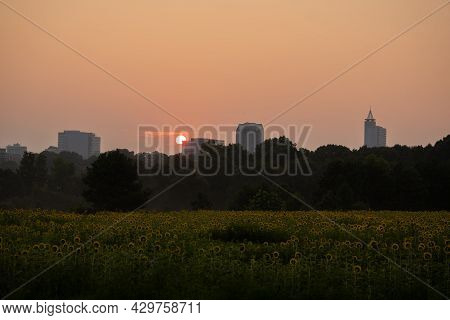The Skyline Of Raleigh, North Carolina At Sunrise With A Sunflower Field At Dix Park In The Foregrou