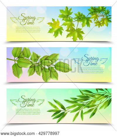 Three Horizontal Banners With Green Branches Of Deciduous Trees In Sun Rays Background Flat Vector I
