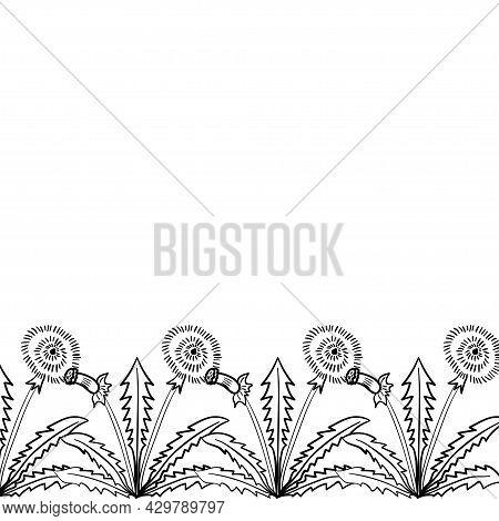 Dandelion Frame Border Dd Ww Herb Isol