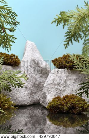 Background For Product Presentation With Branches Of Thuja, Moss And Stones Against Cyan Background.