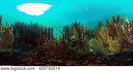 Tropical Coral Reef Seascape With Fishes, Hard And Soft Corals. Philippines. 360vr Video.