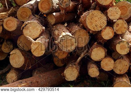 Freshly Cut Pine Logs Stacked Up On Top Of Each Other In A Pile As Background. Forest Destruction, L