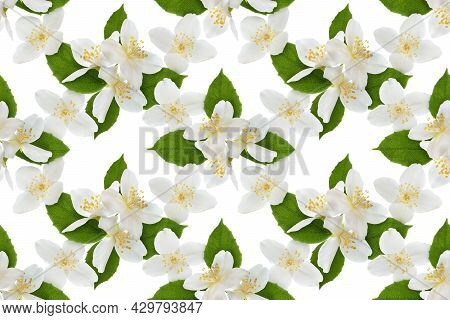 Seamless Repetitive Pattern With Jasmine Flowers And Leaves On White. Floral Background.