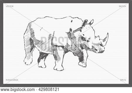Detail Drawn Vector Of Rhinoceros Realistic A Sketch
