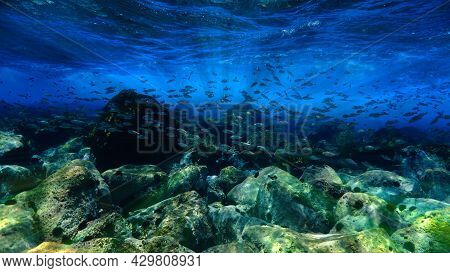 Scuba Diving In A Aquarium. Underwater Photo From A Scuba Dive At The Canary Islands In The Atlantic