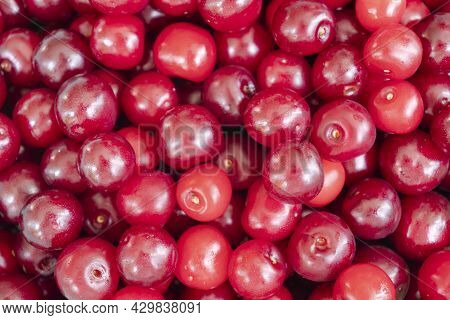 Cherry Pattern. Sweet Cherry Background Texture. Ripe Sweet Red Cherry. Top View. Sweet Ripe Cherry