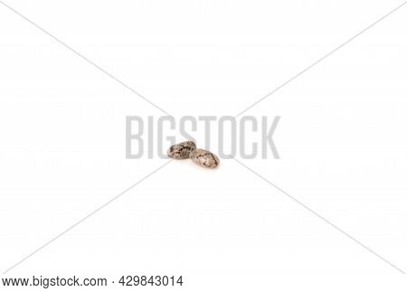 Chia Seeds On White Background. Vegetable Planting
