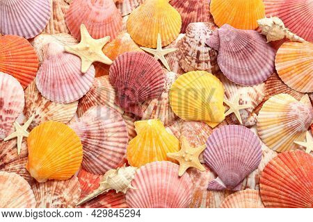 Top View Of Beautiful Different Seashells And Starfishes  As Background