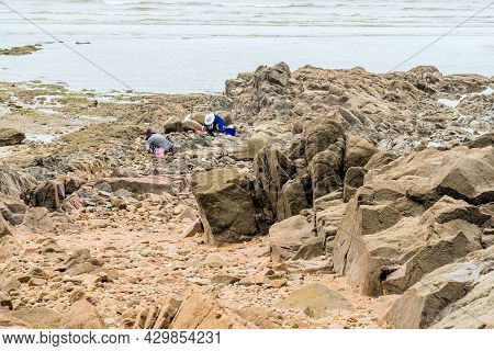 Taean, South Korea; July 30,2021: Unidentified People On Stony Beach At Low Tide Looking For Clams.