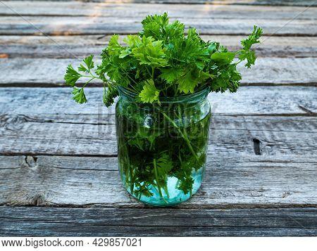 Green Parsley Leaves In A Glass Jar With Water. Petroselinum Crispum. Culinary Seasoning. Vegetarian