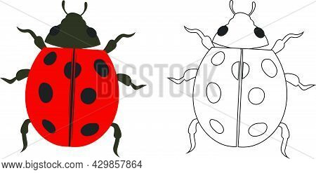 Ladybug Beetle Ladybird Illustration Fill And Outline Isolated On White Background. Insects Bugs Wor