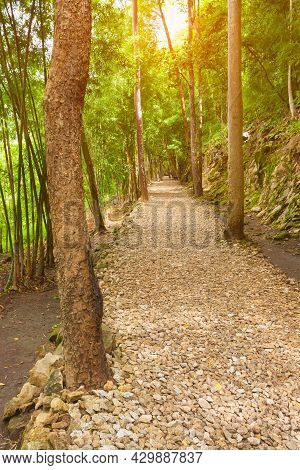 Forest Pathway Surrounding With Natural Tree, Leaf, Stone In National Park. Beautiful Trail Stone Pa