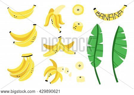 Banana Set. Exotic Tropical Fresh Fruit, Whole And Sliced With Green Leaves, Bananas Peel, Vector Ca