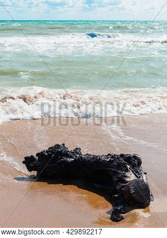 A Large Black Log Was Thrown Onto The Beach After A Violent Storm In The Black Sea