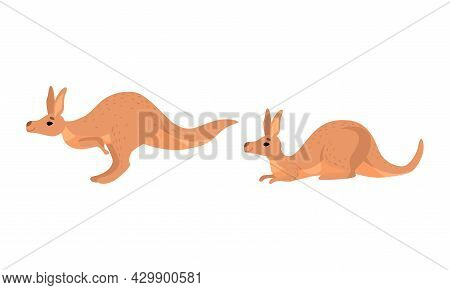 Brown Kangaroo Marsupial Animal With Powerful Hind Legs And Pouch Vector Set