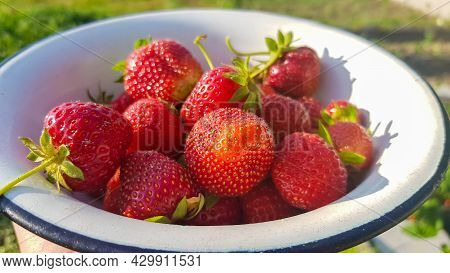 Fresh Juicy Ripe Tasty Organic Strawberries In An Old Metal Bowl Outdoors On A Sunny Summer Day. Str