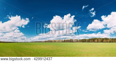 Countryside Rural Field Or Meadow Landscape With Green Grass On Foreground And Forest On Background