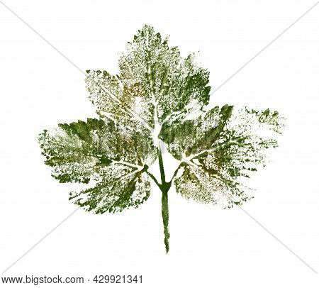 Stamp Of Leaves. Hand Drawn Texture Of Plant. Botanical Illustration On White Isolated Background. F