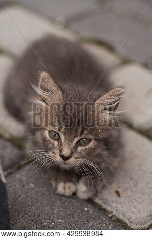 Cute Little Grey Kitten With Green Eyes Relaxing, Closeup