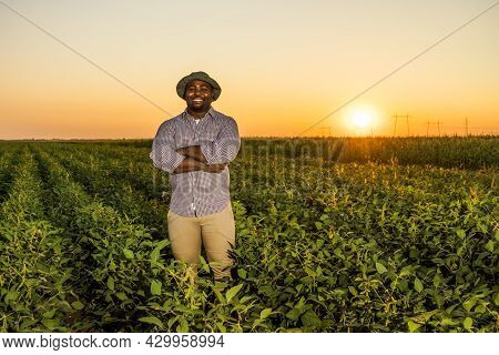 Farmer Is Standing In His Growing Soybean Field. He Is Satisfied Because Of Good Progress Of Plants.