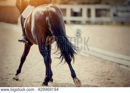 Equestrian Sport. The Black Fluttering Tail Of A Bay Horse.  The Legs Of A Dressage Horse Galloping.