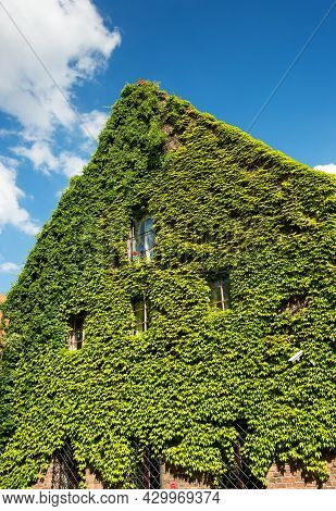 Old Brick House Full Covered With Ivy Against Blue Sky, Vertical Photo