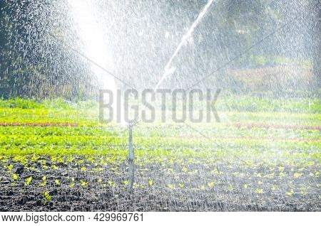 Varied Planting Of Vegetables Being Irrigated With An Irrigation System