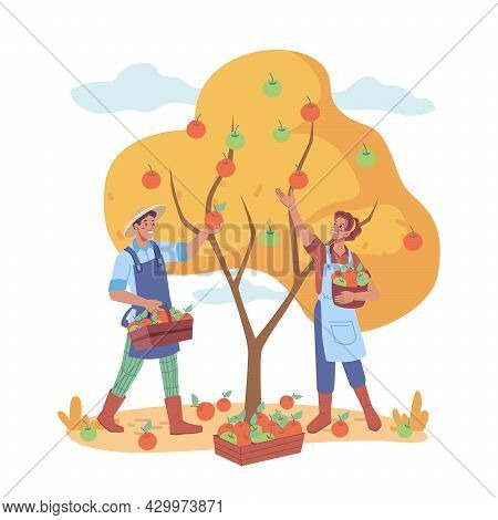Man And Woman Gathering Apples From Tree In Farm, Farmers Working On Collecting Ripe Fruits. Agricul