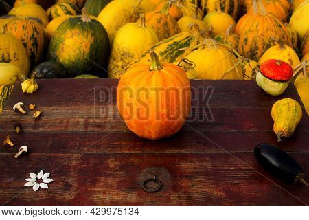 Autumn Frame Composition And Layout Made Of Colorful One Pumpkin Centered, Mushrooms, Aged Old Retro