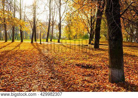 Autumn landscape, morning in the autumn sunny park. Autumn city park, yellow autumn fallen leaves on the foreground. Autumn park, autumn trees, autumn landscape, autumn nature, autumn outdoors