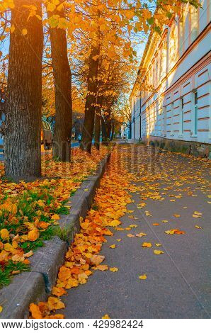 Autumn in the city. City autumn street and autumn fallen leaves on the asphalt road, autumn city landscape, autumn street, autumn city park view, autumn in the city