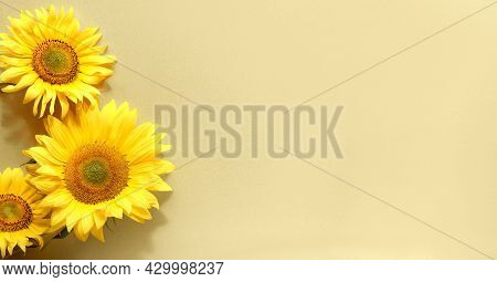 Sunflowers On Panoramic Banner Flat Lay. Beige, Yellow Paper Background. Simple, Minimal Monochromat