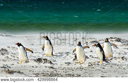 Many Penguins Playing Together On Snowy Land Near Sea