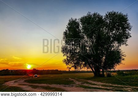 A Dirt Road At Sunset, Going Into The Forest Past A Lonely Tree On A Summer Evening. Summer Forest L