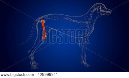 Femur Bones Dog Skeleton Anatomy For Medical Concept 3D
