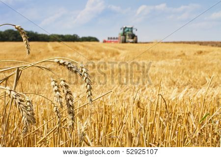 Last Straws After Harvest And Tractor Plowing The Field