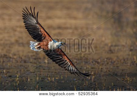 Fish Eagle flyby