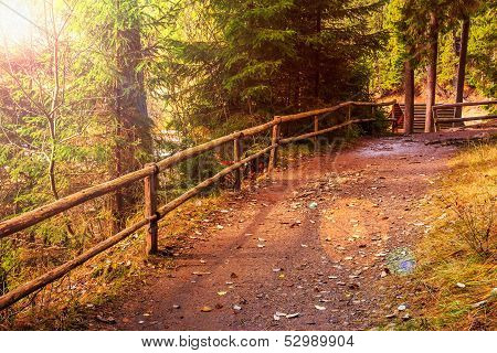 Footpath In Autumn Coniferous Forest