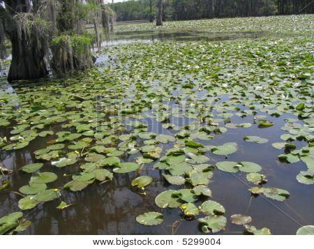 Caddo Lake 6