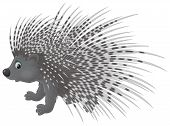Porcupine, illustration isolated on a white background poster