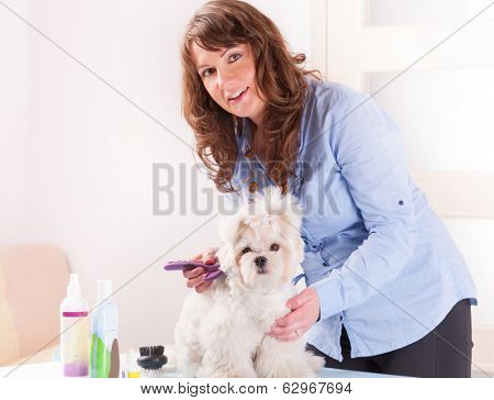 Smiling woman grooming a dog purebreed maltese. Focus intentionally left on dog